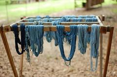 Indigo Dyeing (Joga2323) Tags: blue indigo dyeing