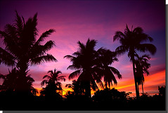 Sunset In Coconut Land - Koh Samui Island (DolliaSH) Tags: trip travel light sunset summer vacation sun holiday hot color tourism sol colors sunrise canon thailand atardecer photography lights soleil photo zonsondergang asia southeastasia warm tramonto foto tour sonnenuntergang place photos bangkok kingdom tailandia paisaje visit location tourist thalande journey thai kohsamui destination traveling sole visiting siam sonne fareast thailandia touring coucherdesoleil tailand puestadelsol 1755 zakat thaimaa thajsko constitutionalmonarchy canonefs1755mmf28isusm southeasternasia canoneos50d colorphotoaward palmtreestree solntse dollia 100commentgroup dollias sheombar subregionofasia purpleblueredorange