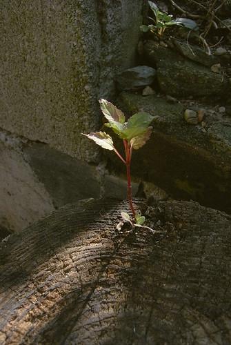 plants-011