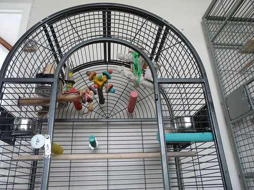 Bird Cages African Grey Cage Setup Discount Parrot Supplies