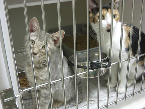 kittens at the North Country SPCA