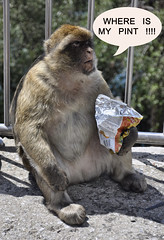 Where is my Pint !!! (Rossella Di Maria ©) Tags: monkey estate andalucia andalusia pint gibraltar 2009 rocca gibilterra bertucce rosselladimaria