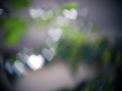 I  Bokeh! (N.i.M.A) Tags: tree heart bokeh heartshaped shapedbokeh