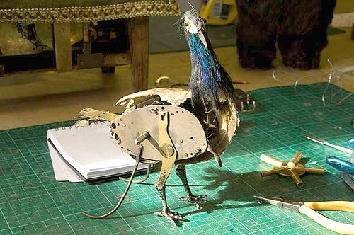 Sad peacock