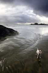 Jack Russell and Ball, Tofino BC (van der Valk Photography) Tags: canada storm west beach vancouver ball jack island coast long russell bc columbia terrier tofino british sooke