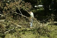 _MG_6485.JPG (zimbablade) Tags: trees sleepyhollow dougmiller videopoem