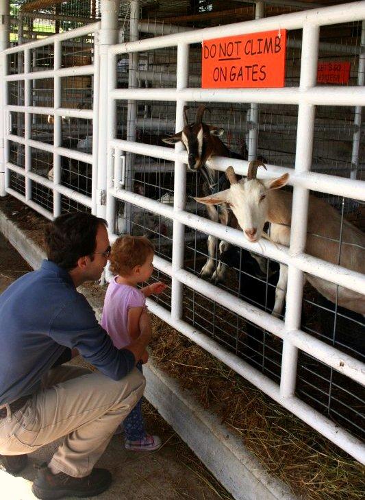 GoatsPumpkinFestival