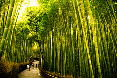 TD: Bamboo Path (rasenkantenstein) Tags: wood trees light shadow people blur tree green art nature japan forest landscape asian japanese big amazing woods kyoto asia path awesome traditional bamboo frame huge framing shaky prefecture kansai bamboos