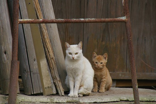 Stray Cat #55