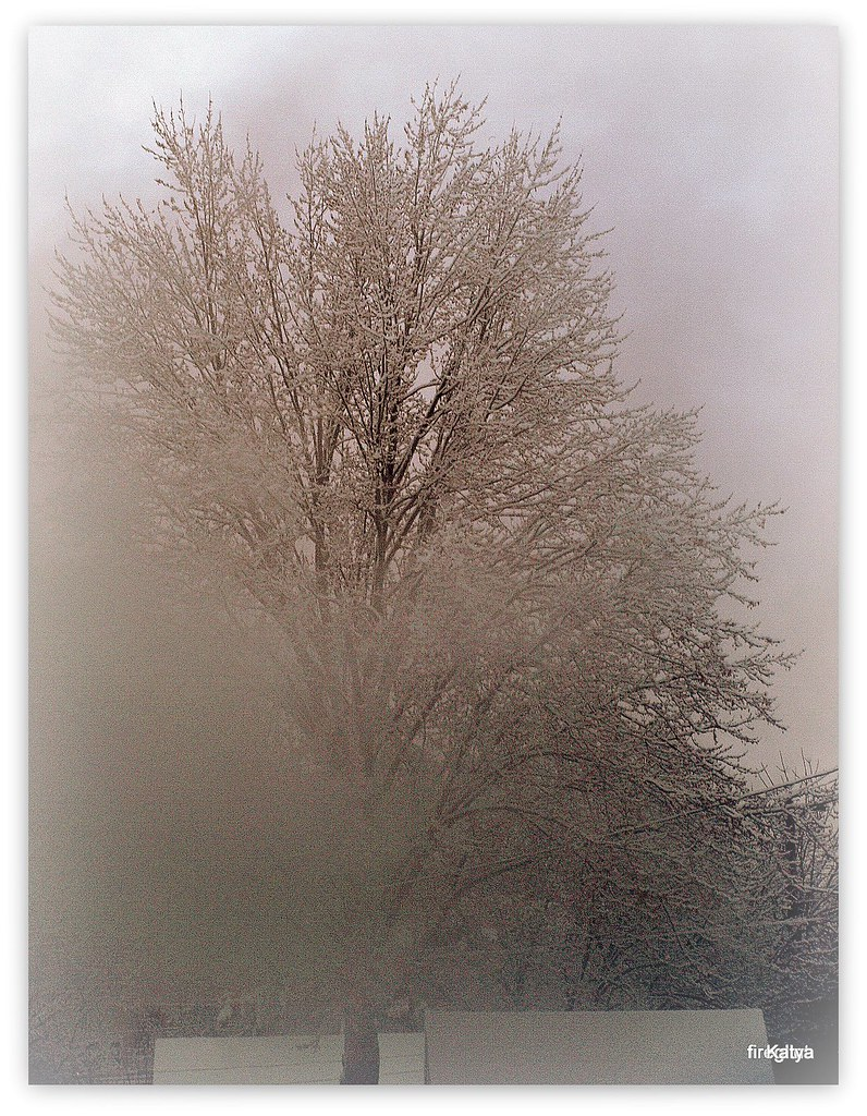 On The Mist Of The Winter