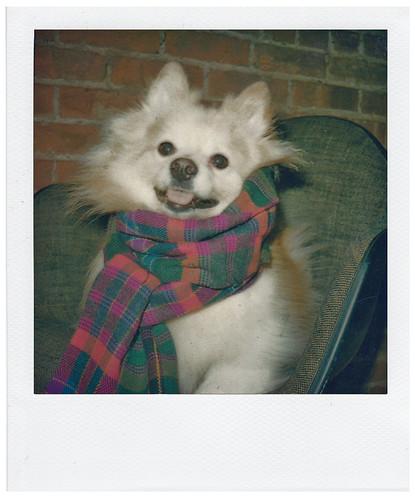 zeppyinscarf