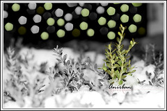 let the green spread everywhere (Anirban (Hold yr clicks a moment plz... I'm bz)) Tags: world green canon 50mm bokeh restore f18 let icicles 40d