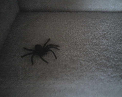 Spider on the stairs