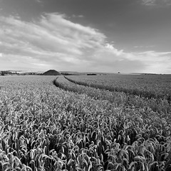 Silbury Hill (Adam Clutterbuck) Tags: uk greatbritain england blackandwhite bw monochrome field square mono blackwhite unitedkingdom britain farm wheat hill farming grain bn elements crop gb bandw wiltshire sq oe silbury arable greengage adamclutterbuck sqbw bwsq showinrecentset openedition