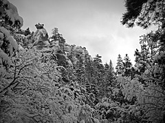 Natures Way (Jenn (ovaunda)) Tags: trees winter mountain snow outside outdoors utah sony harsh cedarcity dsch5 pfogold pfosilver yankeemeadow jennovaunda ovaunda