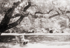 Fort Matanzas Bench (Jamie Powell Sheppard) Tags: blackandwhite bw tree art film bench ir photo florida nps fineart canonae1program sepiatone 50mmlens 35mmslr femalephotographer hc110dilb woodeffect fortmatanzasnationalmonument 29darkredfilter kodakhiebwinfraredfilm