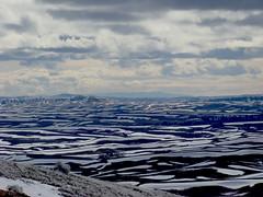 The Palouse (terrygray) Tags: snow scenic idaho rollinghills palouse washingotn steptoebutte