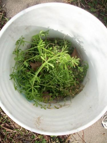 bucket o mystery weed