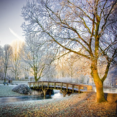 Winter (siebe ) Tags: park winter light cold holland tree dutch landscape cool scenery frost nederland thenetherlands x aalsmeer parc hdr landschap kou vorst aplusphoto hollandstock