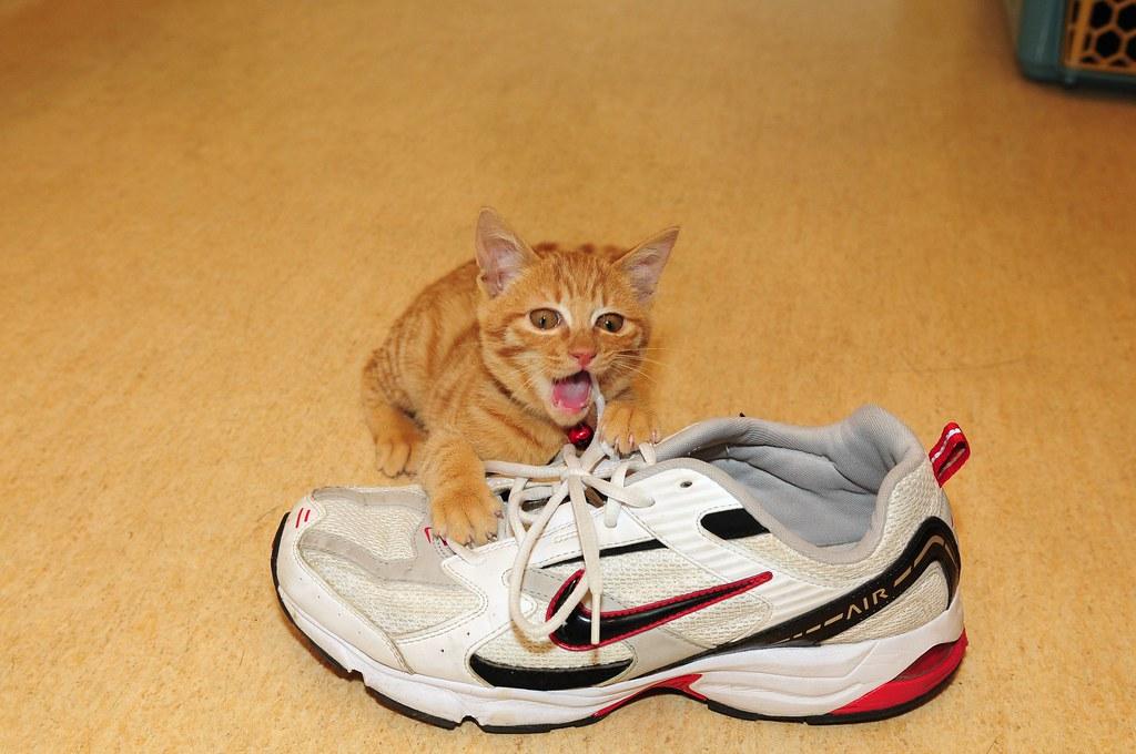 Nike與Puma開戰了