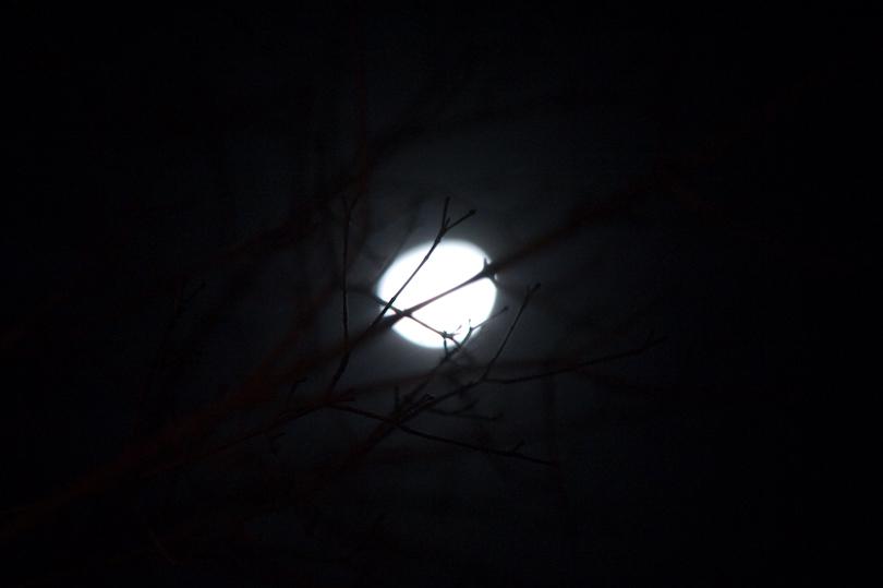 moon through trees.