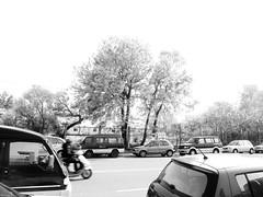 * (YENTHEN) Tags: street bw tree hsinchu taiwan yenthen r0018694