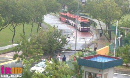 Heavy rain causes tree to fall outside Jurong Primary School and stall traffic
