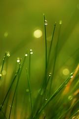 [フリー画像] [植物] [雫/水滴] [緑色/グリーン]        [フリー素材]
