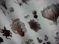 Illustrations of octopuses (individual8) Tags: illustration germany march hamburg octopus 2009 maritimesmuseum