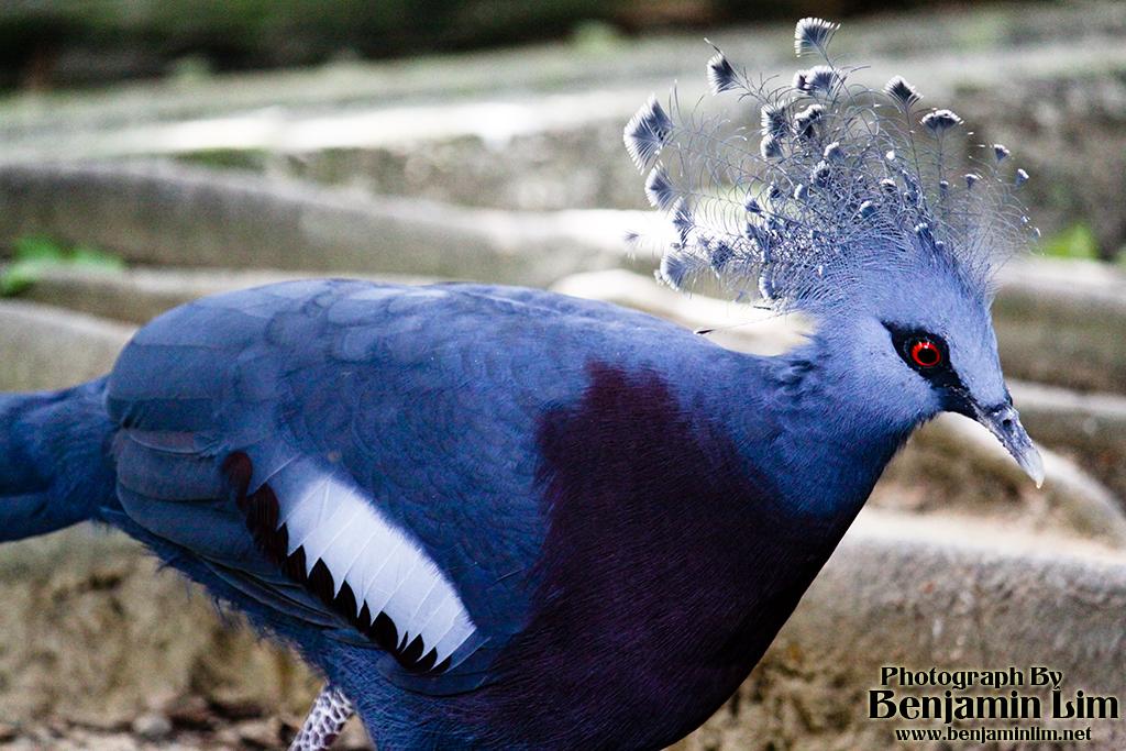 birdpark1_08