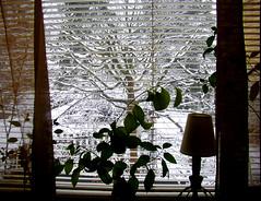My kitchen window this morning....MORE SNOW !! (Per Ola Wiberg ~ powi is back) Tags: winter mars snow window nature march priceless snö 2009 aclass fönster ekerö wrangels exemplaryshotsflickrsbest funfanphotos screamofthephotographer doubledragonawards artofimages phoddástica