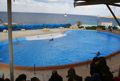Il est faux que les dauphins se sentent bien dans les delphinariums parce qu'ils s'y reproduisent            Mediterraneo Marine Park --- Malta (CaptiveDolphins-vs-WildDolphins) Tags: malta dolphins shame delphinarium malte mediteraneo maltagozo marinelands mediterraneomarinepark captivedolphins themediteranneomarineparkinmaltaisashame unehonte unaverguenza dauphinscaptifs themediteranneomarineparkinsliemathemediteranneomarineparkinmalta themediteranneomarinepark dauphinsdelfines delfinescautivos