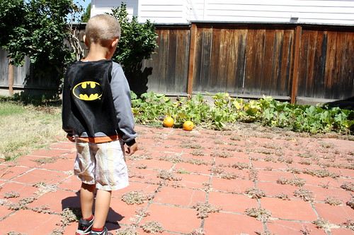 Batman takes on the pumpkins
