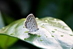butterfly dance (kyuen13) Tags: beautifulmonsters