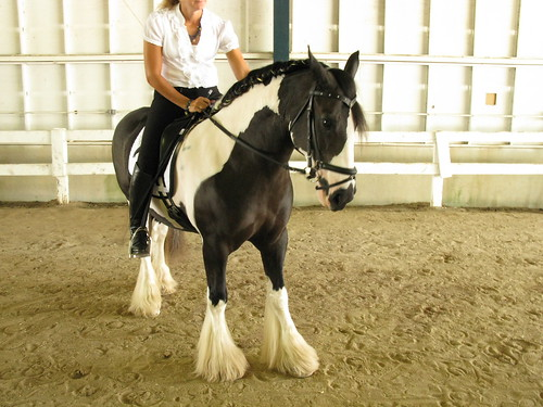 Breyerfest Guest Horse