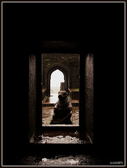 Gaurding the gates (D a r s h i) Tags: temple gate lord bull nandi shiva pune parvati gaurd raigad shivneri darshi nandibail mitholigy