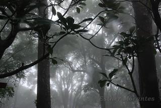 Y llegó la niebla ...