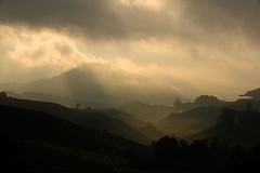 Black spotlight (QooL /   ) Tags: travel sun clouds dark landscape tea hill valley plantation layers rays cameronhighlands sgpalas sununrise