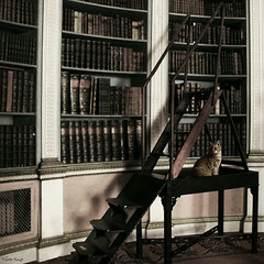 the feline librarian (moggierocket) Tags: uk stairs cat antique interior rich decoration 500x500 thelittledoglaughed winner500 thecatwhoturnedonandoff catsandbooksandoldstuffimustbeinheaven