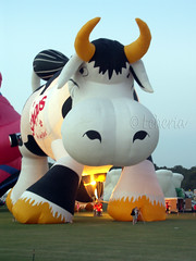 Plano Balloon Festival - Airabelle the cow
