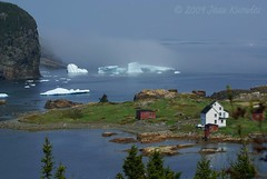 Pure Newfoundland (Jean Knowles) Tags: blue trees houses red white seaweed ice water fog newfoundland rock