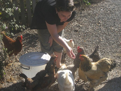 Feeding Chickens at Olema Cottages