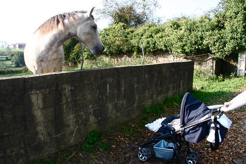 Nora meets a horse