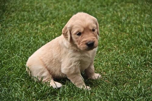 Sad, sad puppy