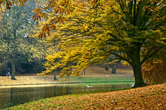 Noorderplantsoen (Danil) Tags: park autumn holland tree bird netherlands pond daniel nederland overcast groningen jogger noorderplantsoen d300 trezoor