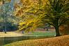 Noorderplantsoen (Dani℮l) Tags: park autumn holland tree bird netherlands pond daniel nederland overcast groningen jogger noorderplantsoen d300 trezoor