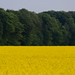 Sur les chemins Normands