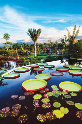 Botanical Garden in Naples by Hilton Naples