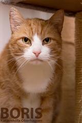 Boris (Oliver Pietern) Tags: cat canon germany deutschland kitty domestic nrw katze paws shelter suchen oberhausen tierheim homeles tierschutz katzenhilfe