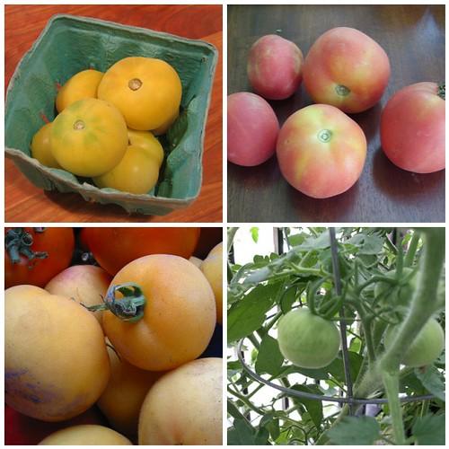 Peach Tomatoes